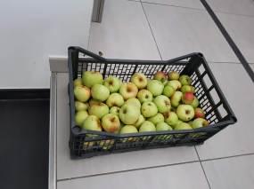 Apfelbaum 1