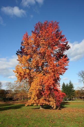 Cette image a un attribut alt vide ; son nom de fichier est amberbaum.jpg